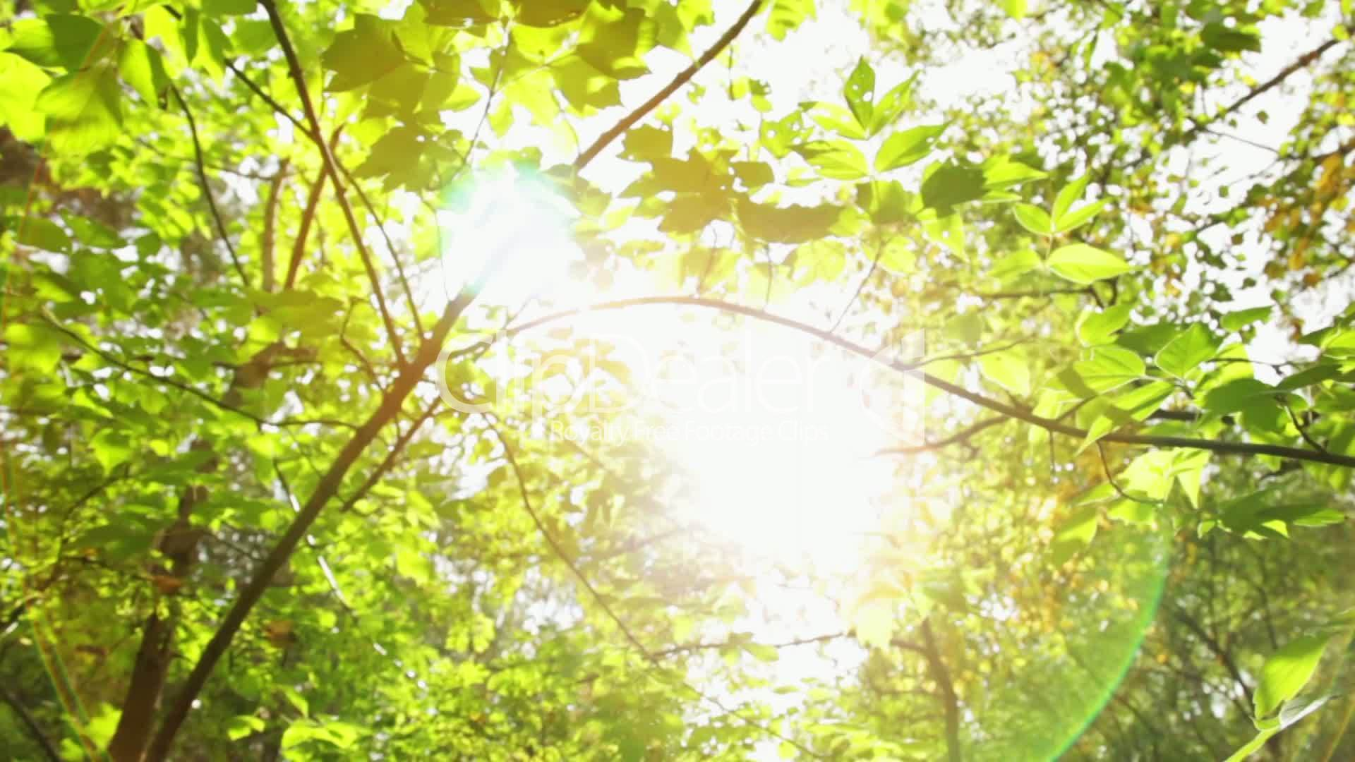 close up of tree leaves royalty free video and stock footage