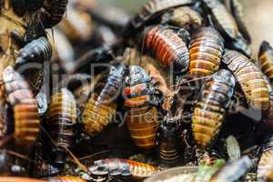 Insect beetle heap