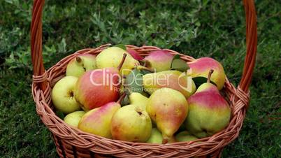 Organic apples and pears in a basket outdoor