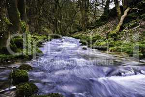 River flowing through mossy woodland