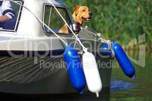 Hund auf einem Motorboot mit Fender