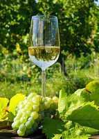 Weißwein - White Wine