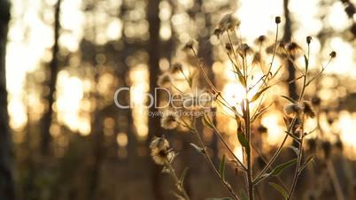 Forest flora in autumn