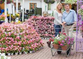 Couple pushing a trolley in garden centre