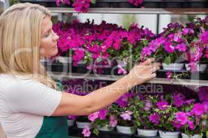 Employee taking flowers from the shelf