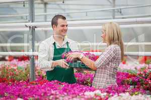 Employee in garden center giving woman tray of flowers