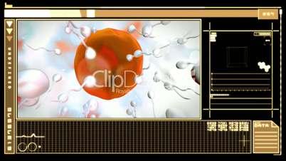 Digital interface showing egg cell fertilization