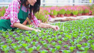 Woman checking the plants