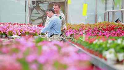 Customer and employee walking through the greenhouse