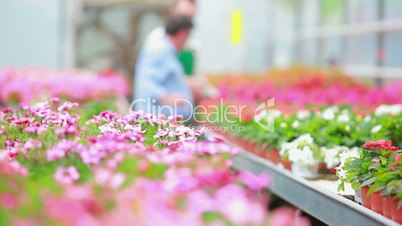 Customer and employee talking and looking at flowers