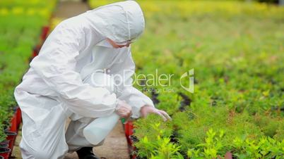 Gardener wearing protection suit spraying the plants