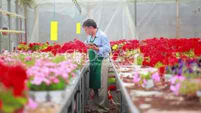Man standing at the greenhouse