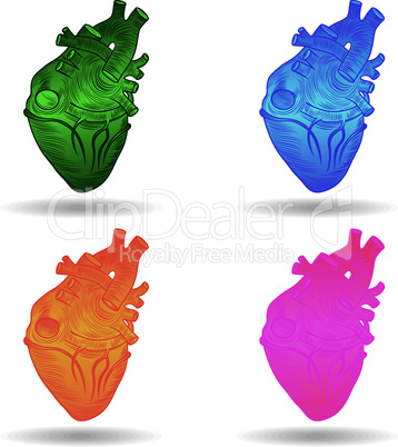 Heart human body anatomy sketch set