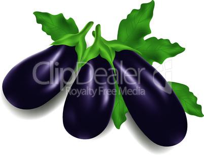 vector eggplants
