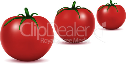 vector  tomatoes