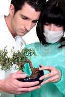 Doctors examining bonsai