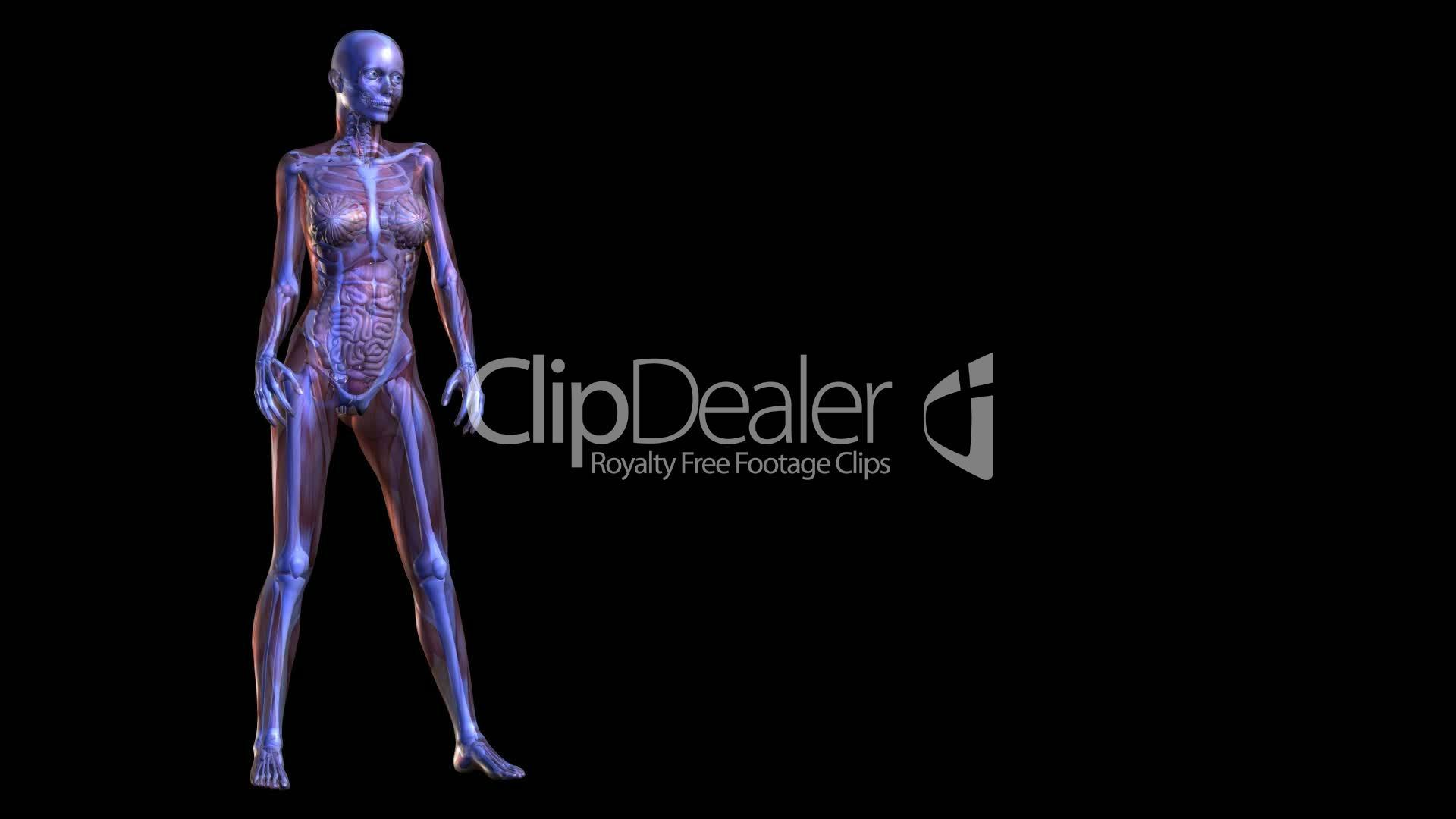 Anatomie: Lizenzfreie Stock Videos und Clips