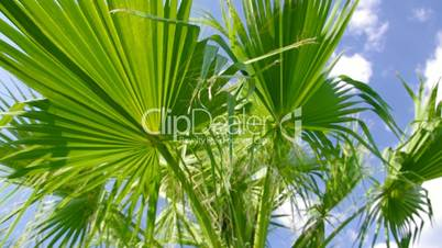 Palm tree against