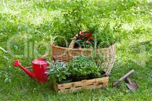 Kräuter, Herbs