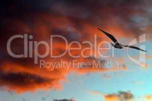 Seagull against sunset sky