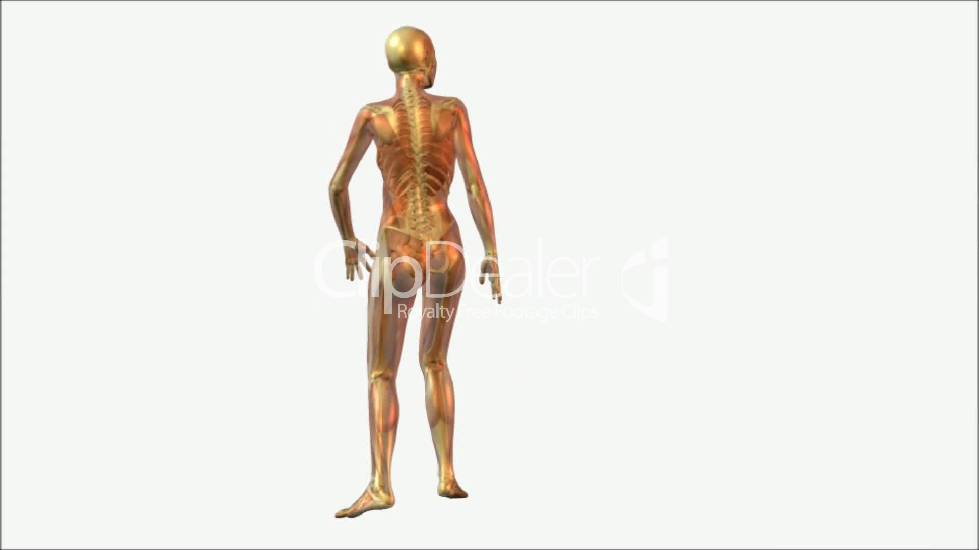 Anatomy: Royalty-free video and stock footage