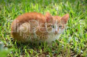 kleine Katze sitzt im Gras