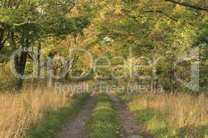 Wanderweg / Trail