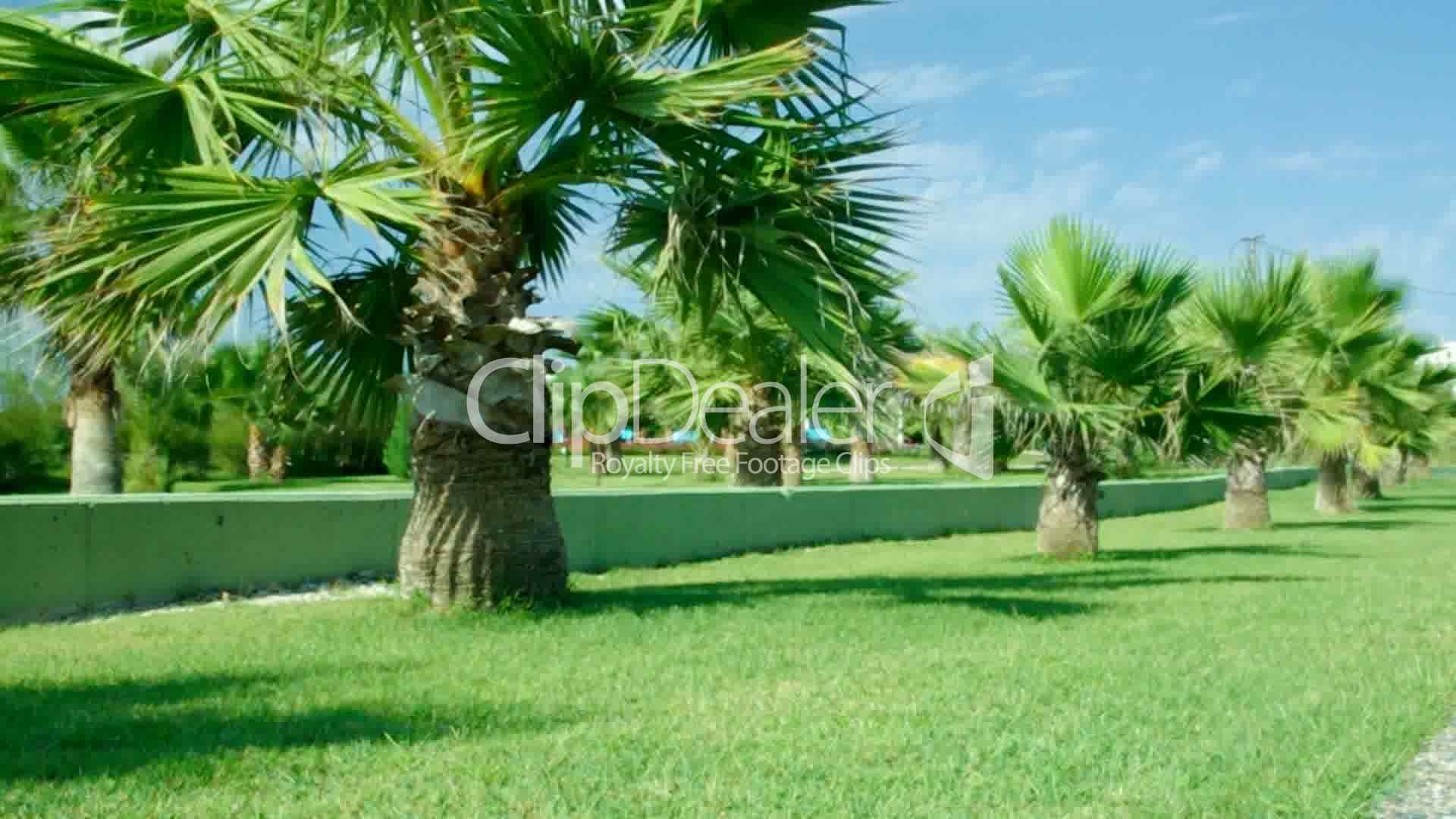 Beauty Palmtrees Royaltyfree Video And Stock Footage. Laser Hair Removal Boston Ma. Contoso Administrator Password. Colleges Near Savannah Ga Integra Skin Graft. Business Card Design Print How To Start Ira. Online Degree In Business Management. San Diego Medical Malpractice. Virginia Birth Injury Fund Perkins Heavy Haul. University Of Washington Admissions