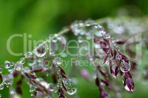 Macro Water Drops Nature