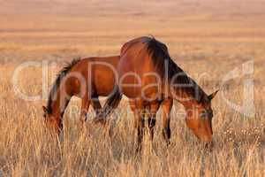 Two horses grazing in pasture
