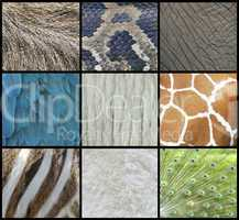 Animal  Skin, Fur And Feathers Collage