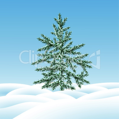 Christmas tree fir  on  a snow glade