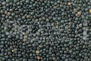 Backdrop of Black Lentil