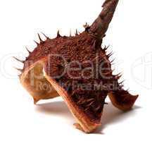 Dry peel of horse chestnut