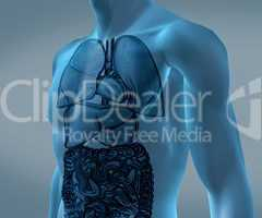 Transparent digital blue body with organs