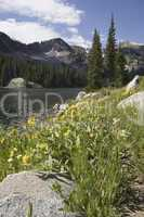 Mountain Lake with Wildflowers