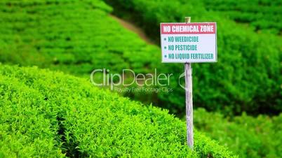 Organic tea garden in sri lanka