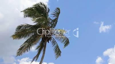palm tree on blue sky