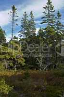Views, Wonderland Trail, Acadia NP