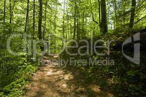 Trail, Pisgah NF