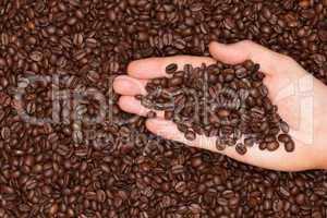 Frisch geröstete Kaffeebohnen auf einer Hand