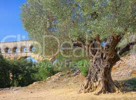 Pont du Gard 11