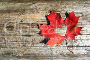 Maple-Leaf to cut the heart