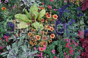 Sommerblumenbeet