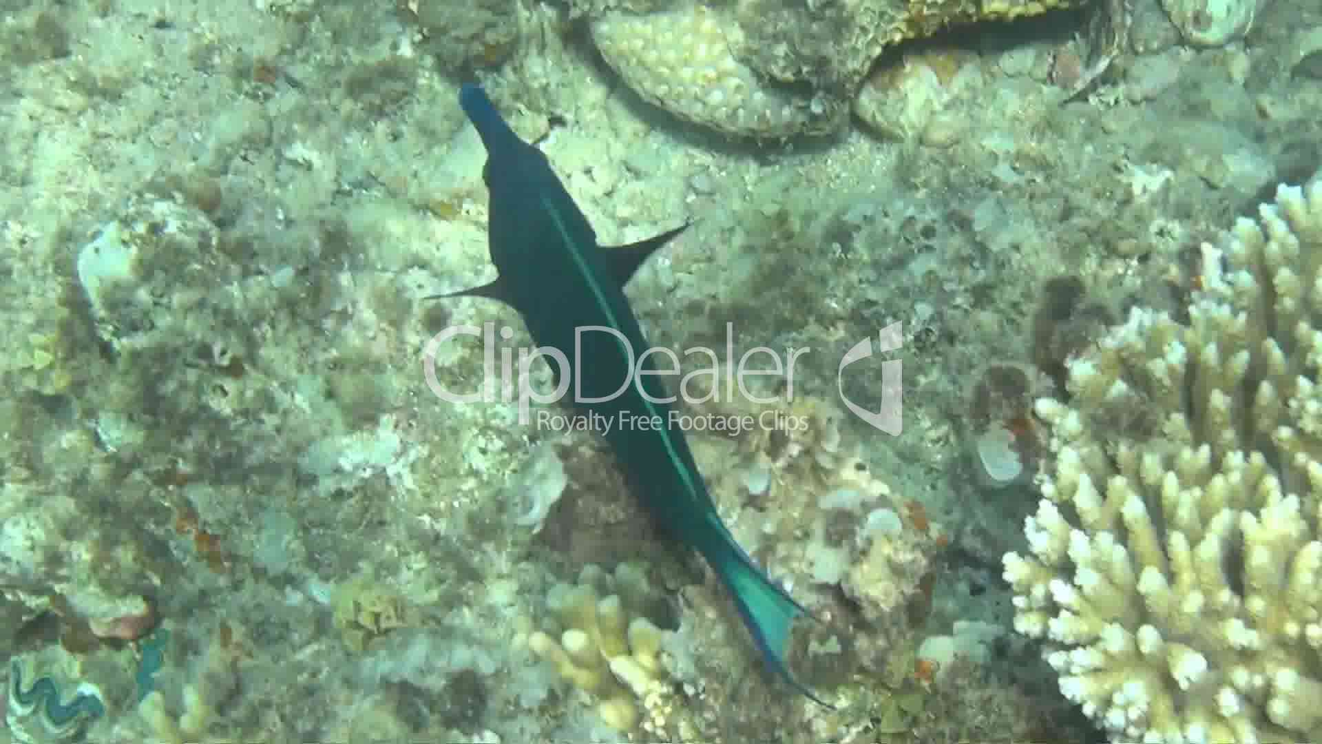 Fish red sea 03 royalty free video and stock footage for Red sea fish