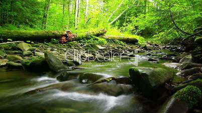 forest stream - slow motion