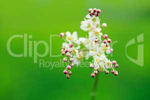 Wildflower Blossom