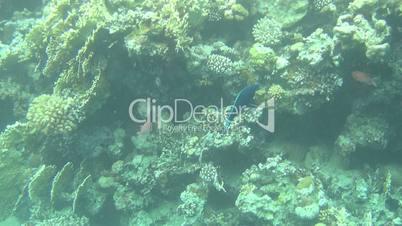 Fish Red Sea 04