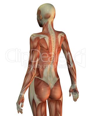 Anatomie Frau Oberkörper von hinten: Lizenzfreie Bilder und Fotos