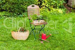 Korb mit Kräutern im Garten, basket with herbs in a garden